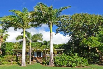 Cheap Nevis house for sale with large garden.